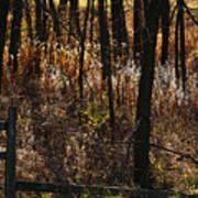 Woods - 2 Art Print