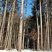 Woods In Winter Art Print