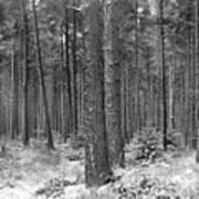 Woods In Winter, Slaley Art Print