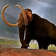 Woolly Mammoth Art Print