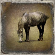 Working Horse Art Print