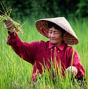 Working The Fields, Thailand Art Print