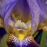 World Inside Of Iris Art Print