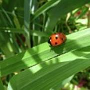 World Of Ladybug 1 Art Print