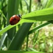 World Of Ladybug 2 Art Print