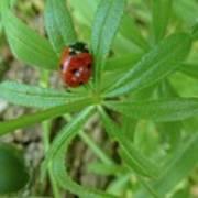 World Of Ladybug 3 Art Print