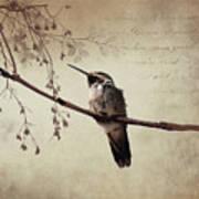 World's Smallest Bird Art Print