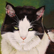 Wozzle - Domestic Cat Art Print
