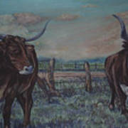 Wright Longhorns Art Print