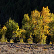 Wyoming Autumn Color One Art Print