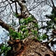 Ye Ole Tree At Chichen Itza Art Print
