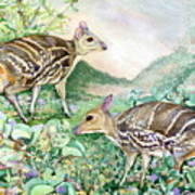 Yello-striped Mouse Deer Art Print