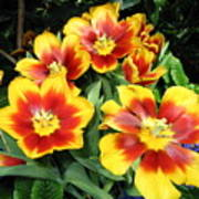 Yellow And Red Flowers Art Print