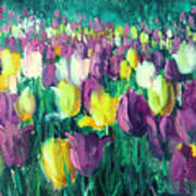 Yellow And Violet Tulips Art Print