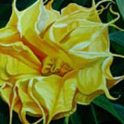Yellow Blast Art Print