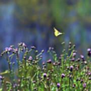 Yellow Butterfly Flyaway Art Print