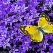 Yellow Butterfly On Mee Art Print