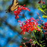 Yellow Butterfly On Red Flowers Art Print