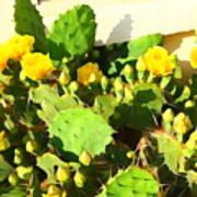 Yellow Cactus Blossoms 594 Art Print