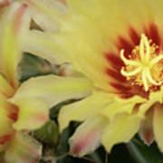 Yellow Cactus Plant Flower Art Print
