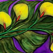 Yellow Calalilies Art Print