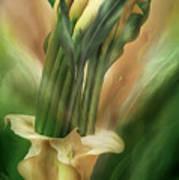 Yellow Callas In Calla Vase Art Print