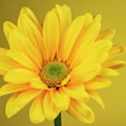 Yellow Chrysanthemum On Yellow Art Print