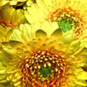 Yellow Cluster Art Print