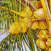 Yellow Coconuts- 01 Art Print