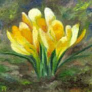 Yellow Crocus Art Print