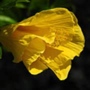 Yellow Fellow Art Print