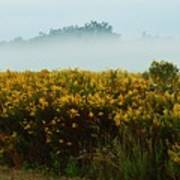 Yellow Field And The Fog Art Print