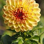 Yellow Flora Art Print