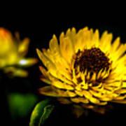 Yellow Flower 5 Art Print
