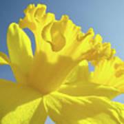Yellow Flower Floral Daffodils Art Prints Spring Blue Sky Baslee Troutman Art Print