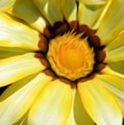Yellow Flower In The Sun Art Print