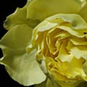 Yellow Flower On Black Art Print