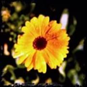 Yellow Flower With Rain Drops Art Print