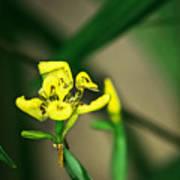 Yellow Flowers I Art Print