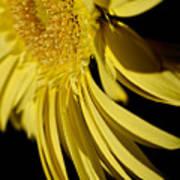 Yellow Gerbera Daisy By Kaye Menner Art Print