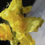 Yellow Glad 092217 1a Art Print