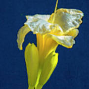 Yellow Glue Blue #f9 Art Print