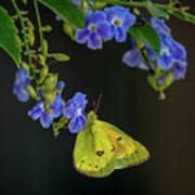 Yellow Grass Butterfly Art Print