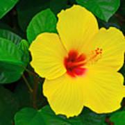 Yellow Hibiscus 3388 Art Print