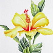 Yellow Hibiscus Art Print