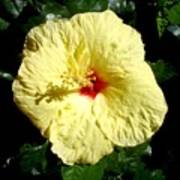 Yellow Hibiscus The Hawaiian State Flower Art Print