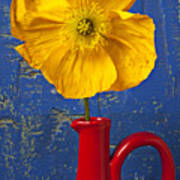Yellow Iceland Poppy Red Pitcher Art Print