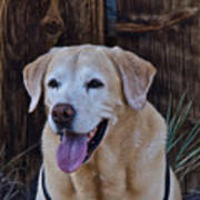 Yellow Lab At Bodie Art Print