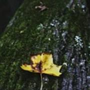 Yellow Leaf On Mossy Tree Art Print