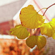 Yellow Leaves Art Print